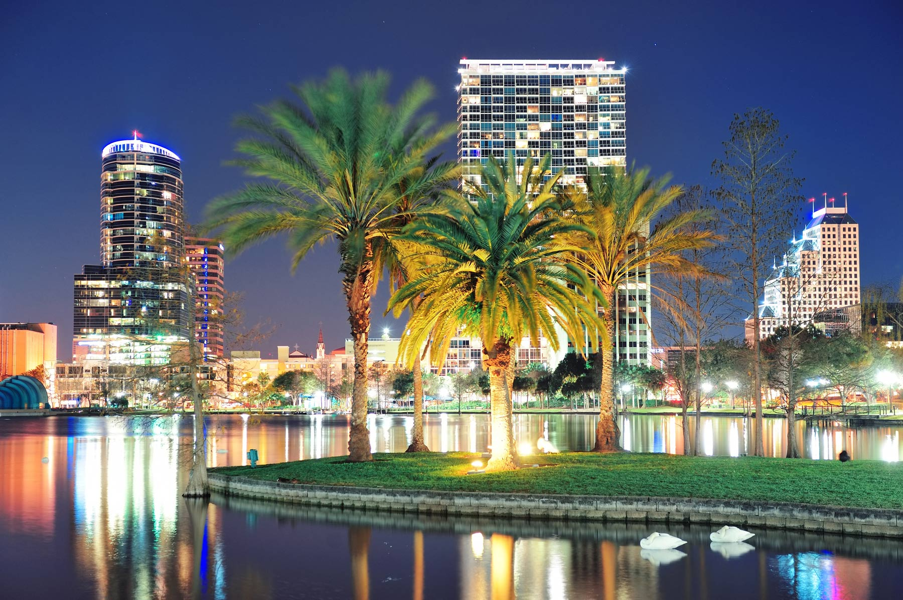 Orlando skyline at night with palm trees